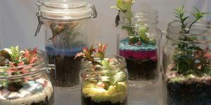 Terraium Planting 7