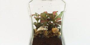 Terrarium using coffee containers 2