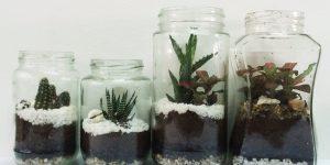 Terrarium using coffee containers